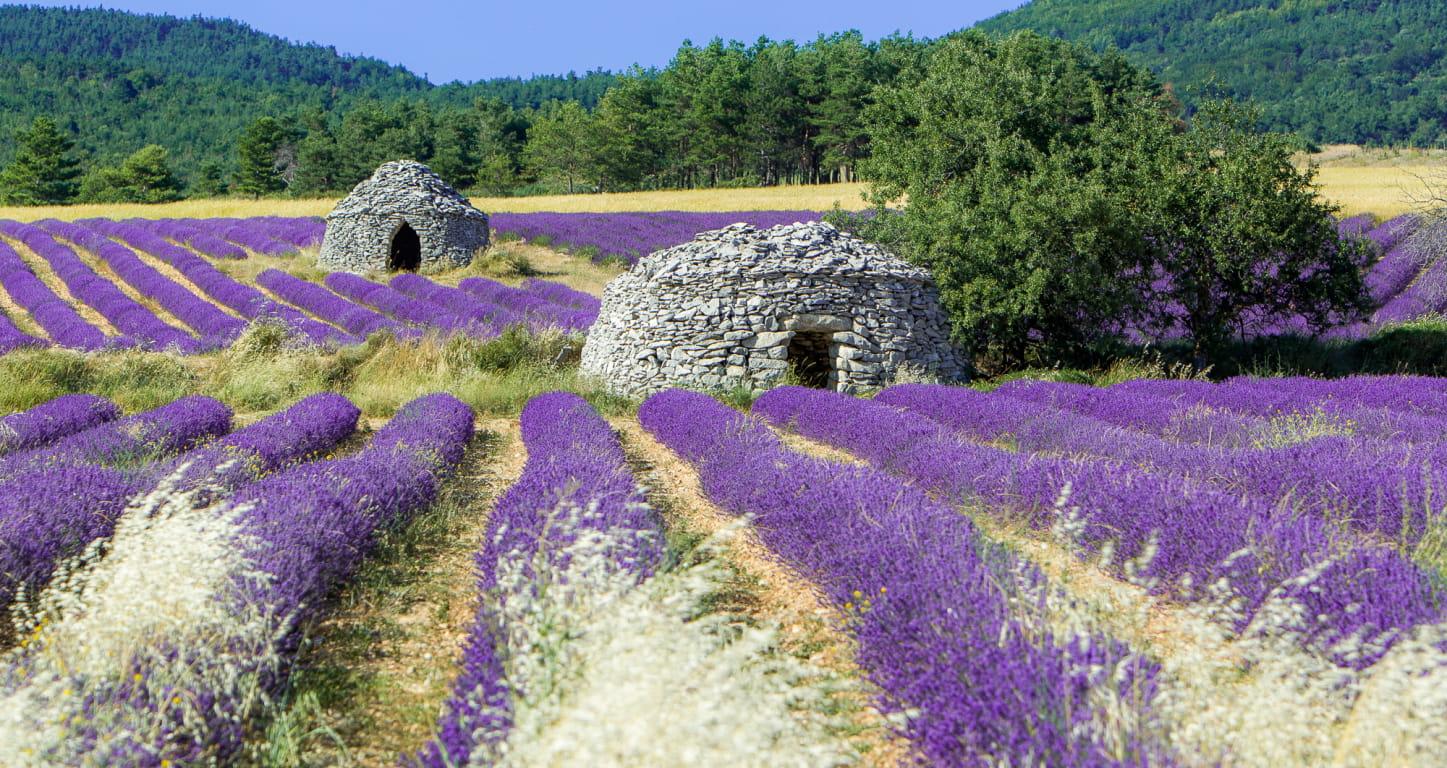 La Drôme Provençale - bories dans les champs de lavande