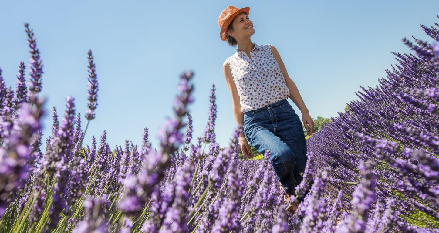 Provence - Drôme Balade dans un champ de lavande