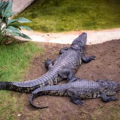 Ferme aux crocodiles en Drôme provençale - incontournable