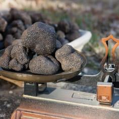 balance à plateaux avec des truffes