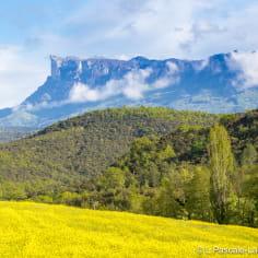 Champ de colza en fleurs au pied de la monatgne des Trois Becs dans la Drôme