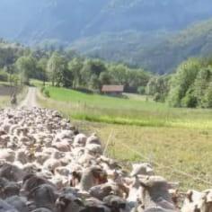 Sylvie CATIER / Ferme Les Derbons portrait agritourisme hebergement