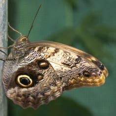 ferme-aux-papillons-a-die