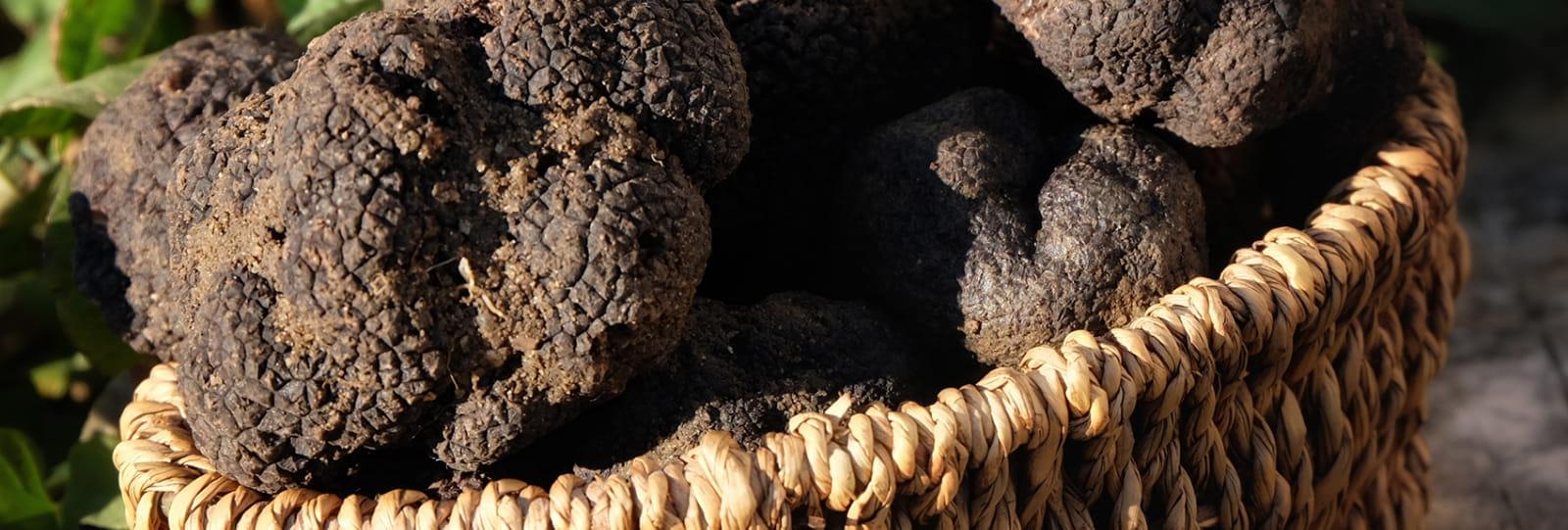 Découverte de la truffe à Grignan