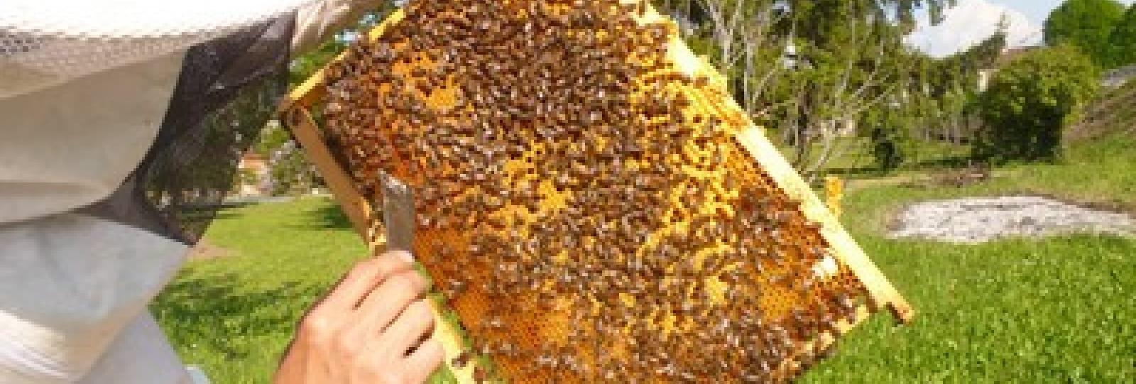 Les ruches de la Bayarde