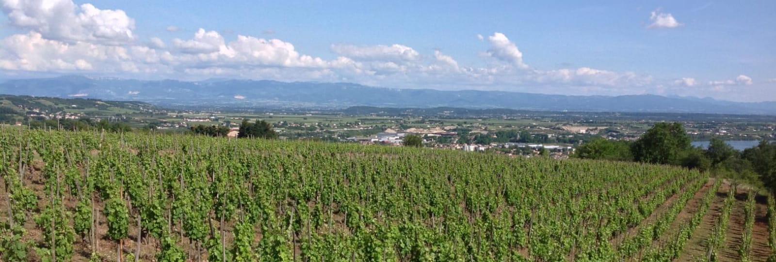 Séjour sur mesure pour passionnés de grands vins
