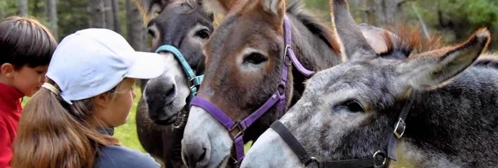 Balade avec les ânes autour de Luc-en-Diois avec Vercors Escapade