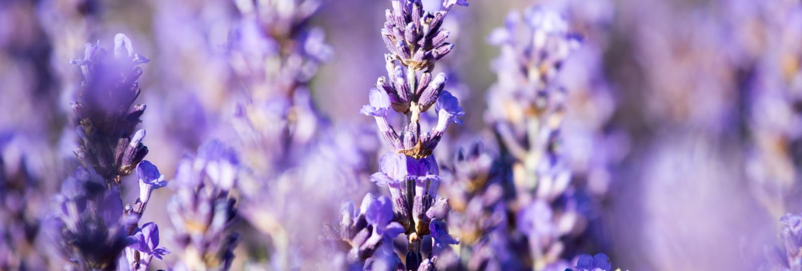 Plants & Wellness : Nyons / Buis-les-Baronnies