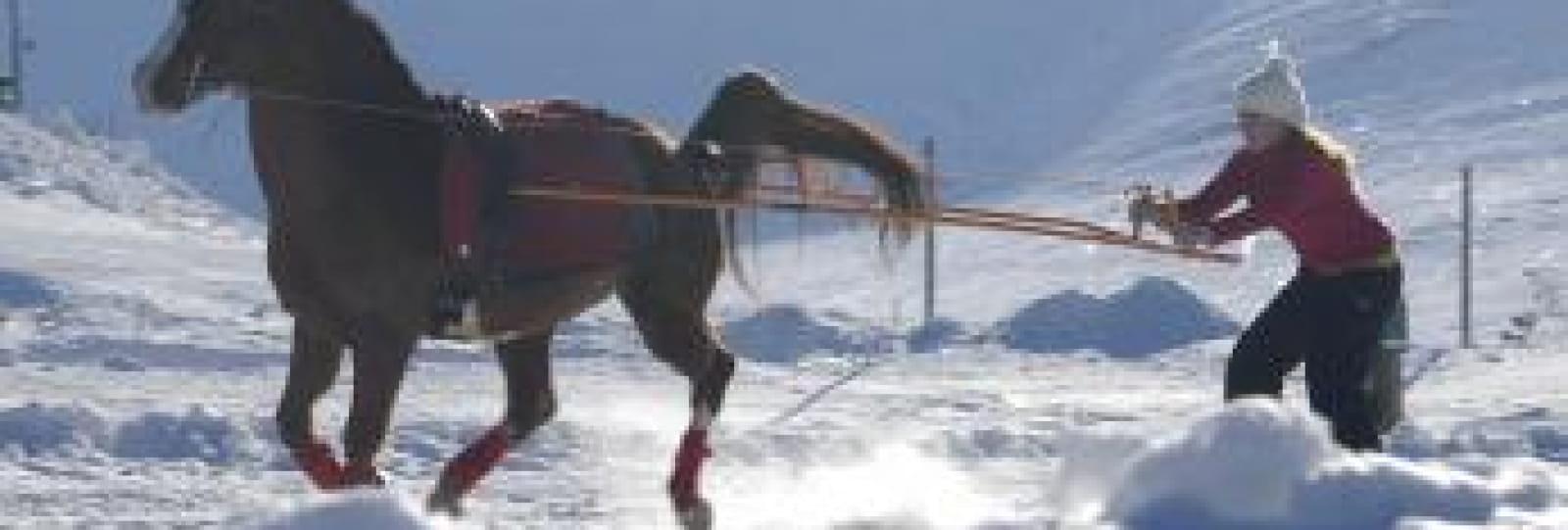 Ski joëring avec Vercors à cheval