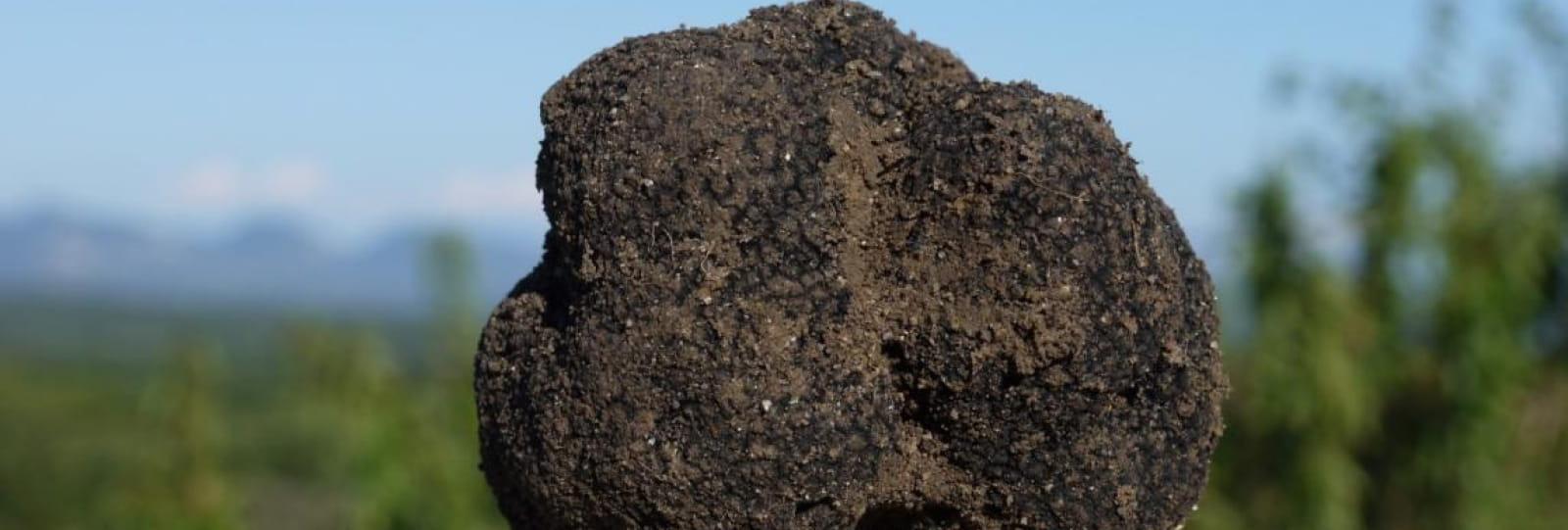La truffe noire - Ferme Les Eybrachas