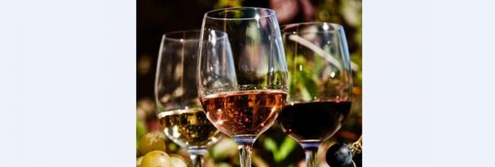Voyage au cœur des vignobles