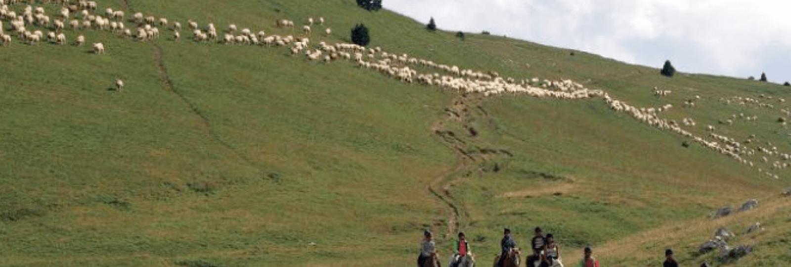 Rando équestre itinérante Juniors (10-13 ans) dans la forêt de Lente et les alpages du Vercors