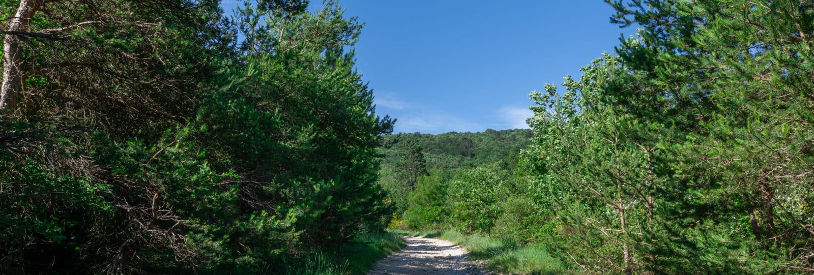 Chemin du Bois de Jamot