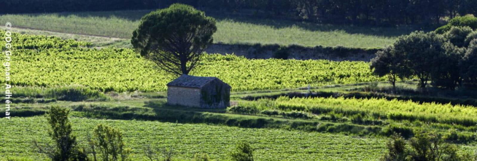 1 Des vignes et des cabanons