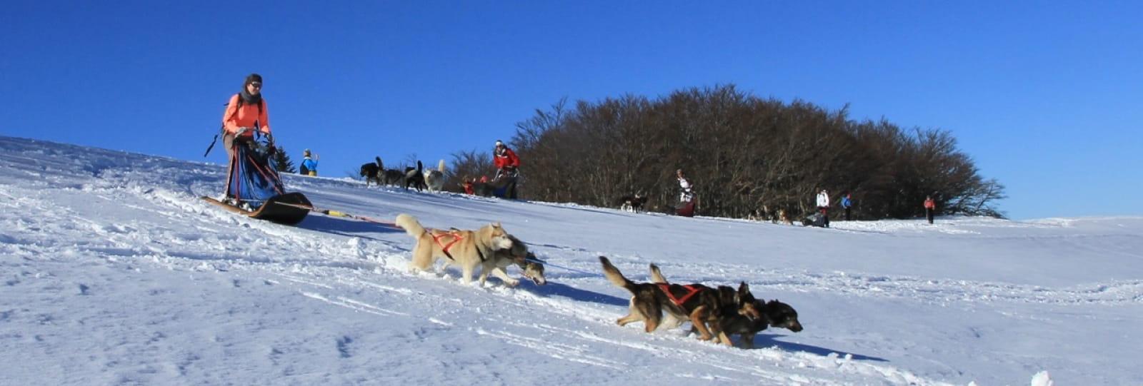 Traîneau à chiens : le Vercors façon trappeur