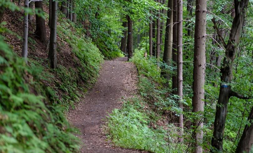 Bon plan VTT 'La combe Oternaud et le bois de Sisay'