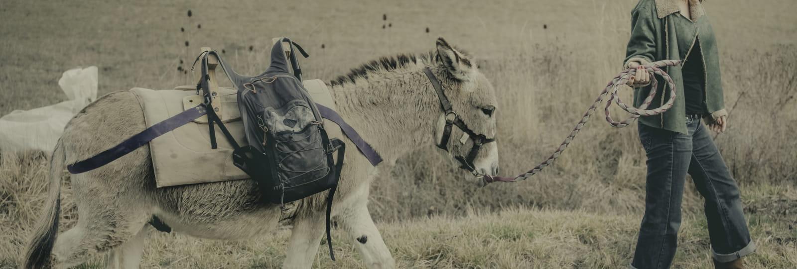 La Flânerie - Balade avec des ânes