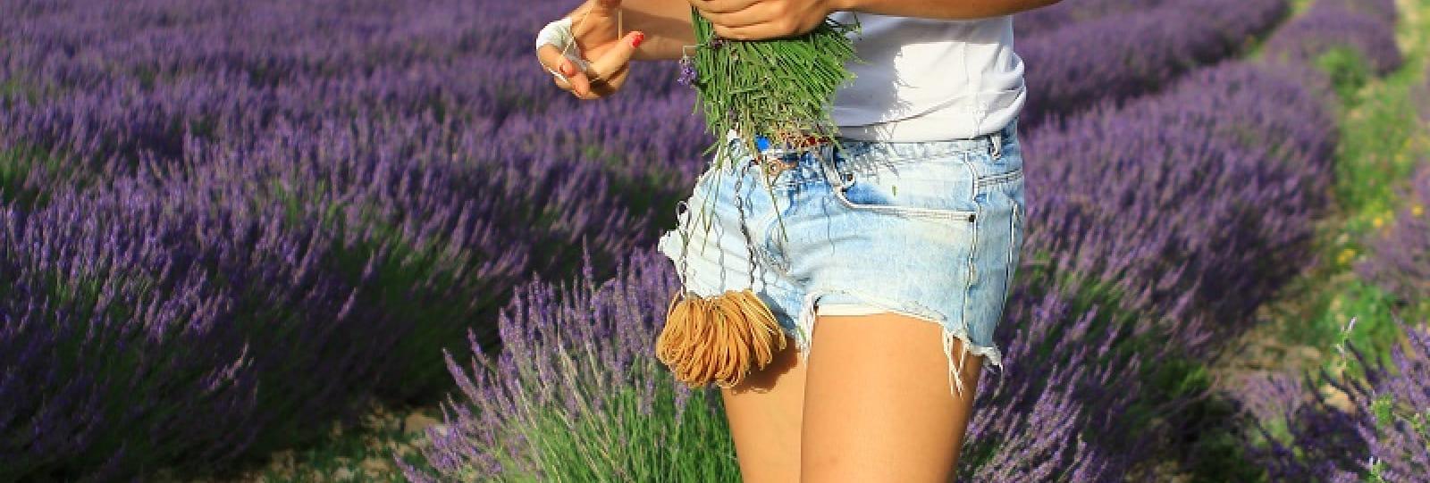 Ho ! Bouquet de Lavande, visit by a lavender farmer
