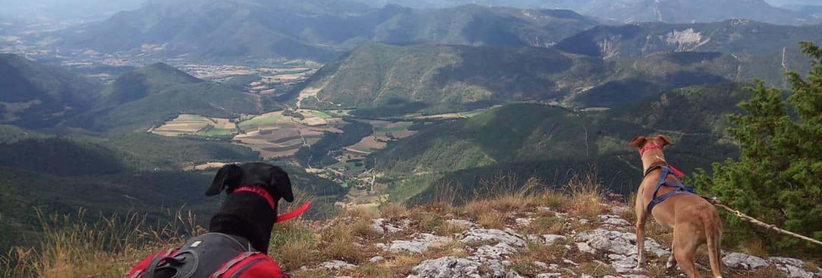 Cani-rando avec l'Aventure Blanche