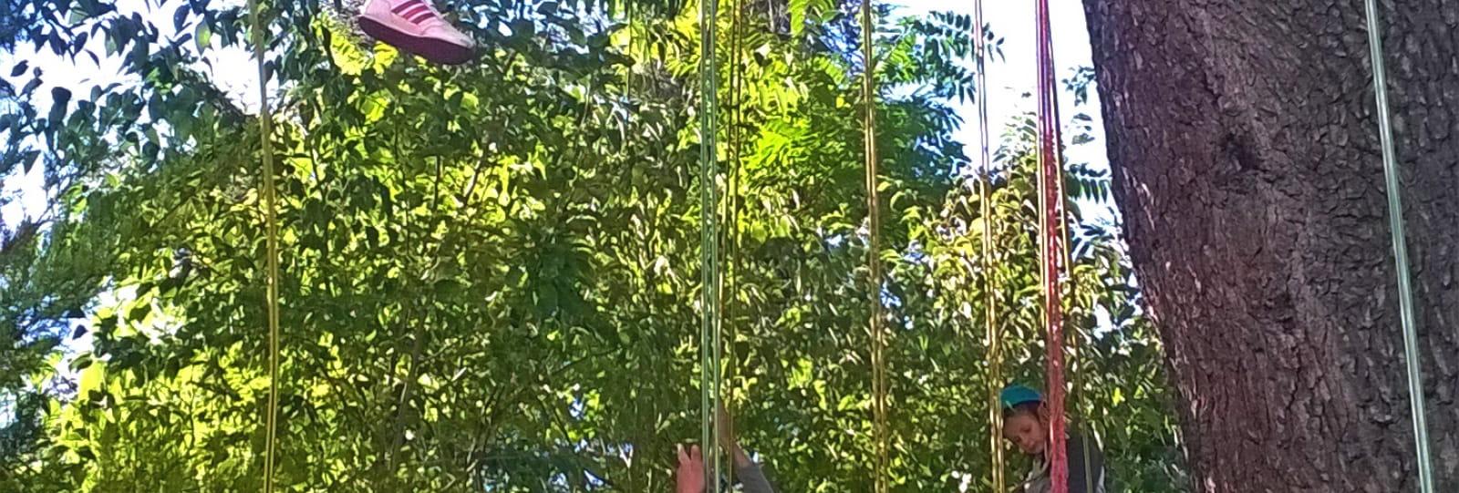Séjour scolaire iddj drome grimpe d'arbre