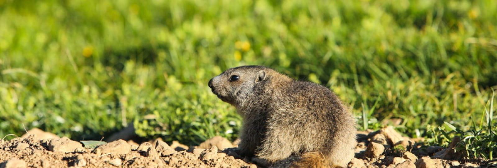 Sorties Marmottes