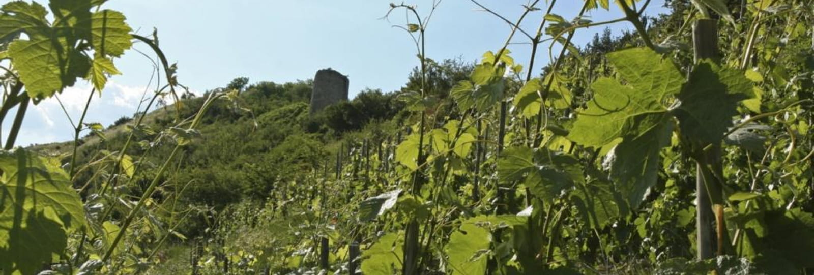 Vignoble du coteau de Brézème