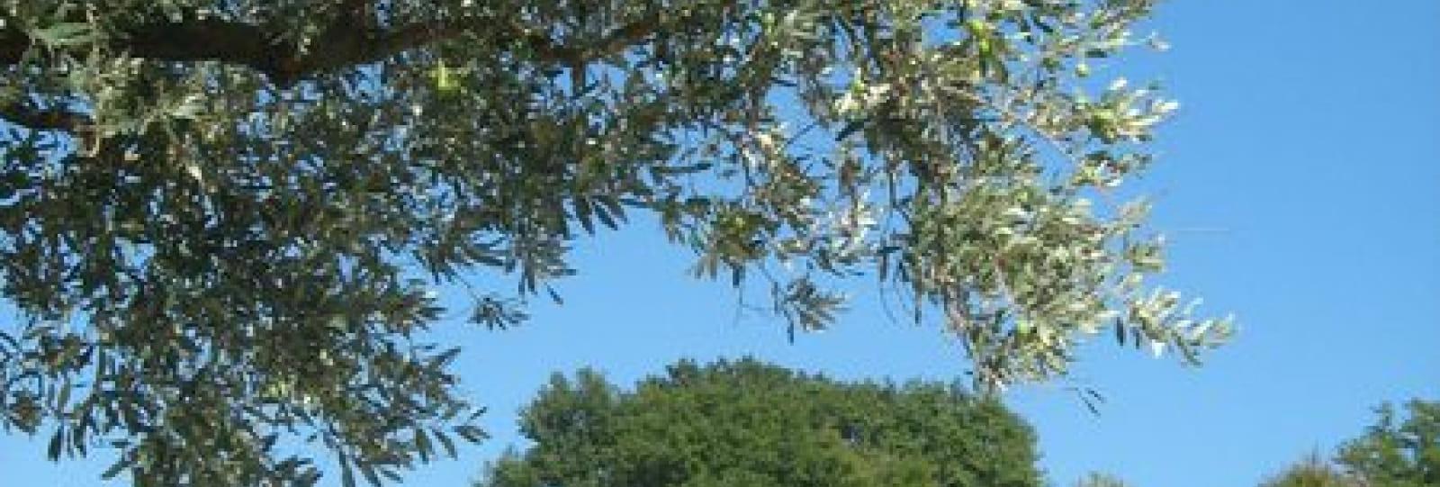 Aire de Camping-cars privée Domaine de la Taurelle