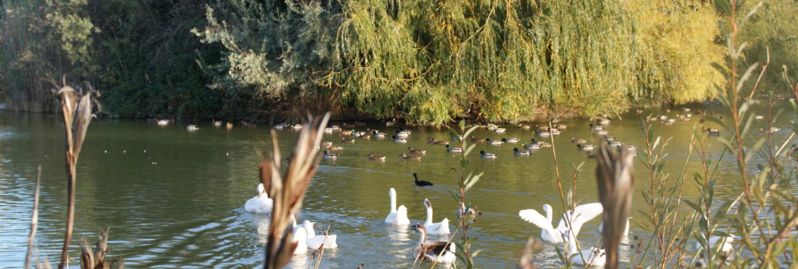 Parc animalier du Domaine de la Treille