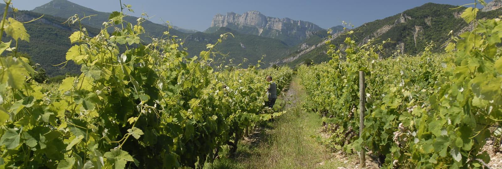 Cave Union des Jeunes Viticulteurs Récoltants