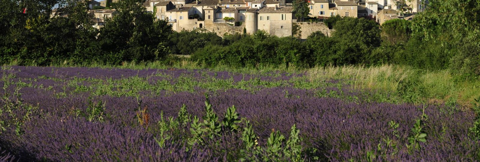 Grignan et ses lavandes - Village de Grignan