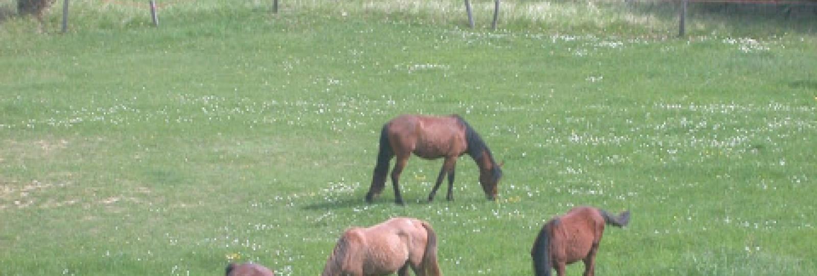 Equitation au Haras des Guerets