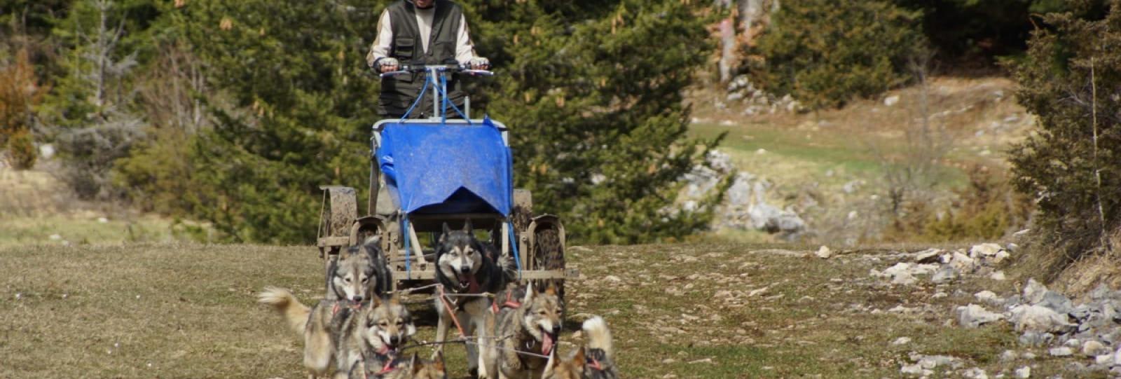Initiation au husky-kart avec Esprit du Nord