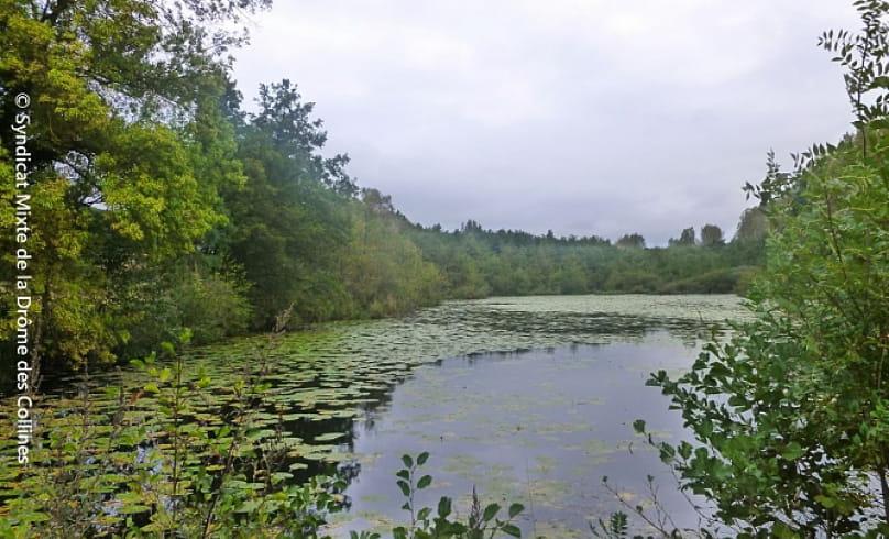 Bon plan à pied 'Bois de l'äne'_Etang du Mouchet_ Chavannes