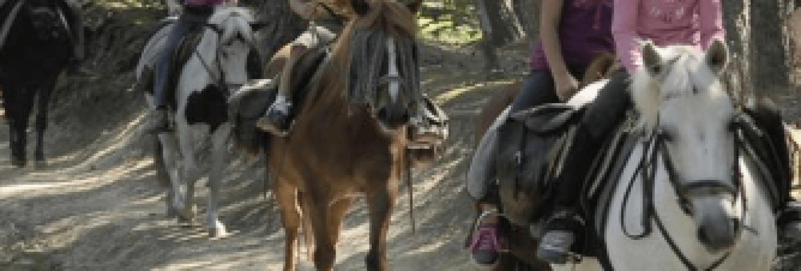 Stage chiens et poneys pour les 9-11 ans