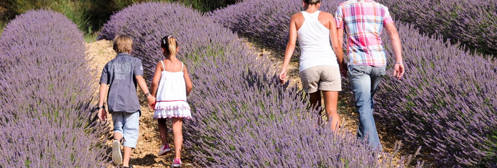 Séjour 'Plantes et Bien-être en Baronnies Provençales'