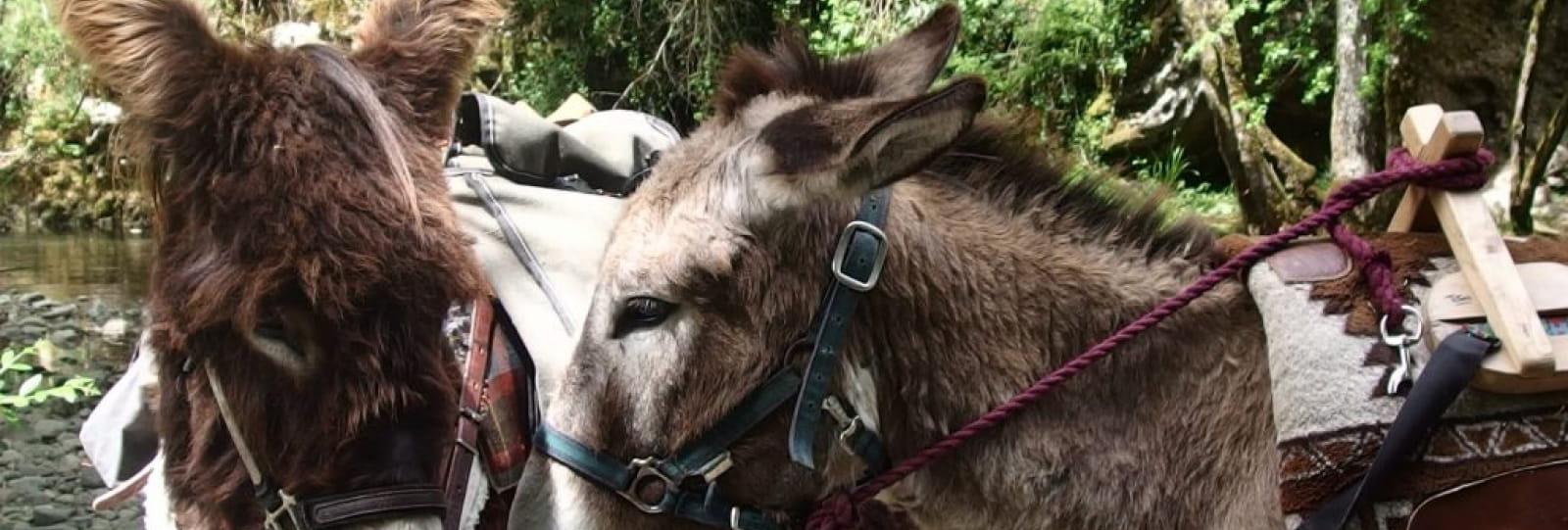 Grande découverte des ânes de bât