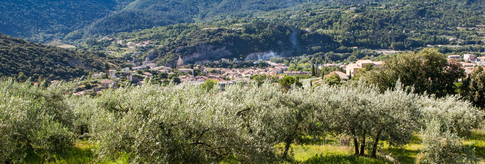 The land of the olive and lavender