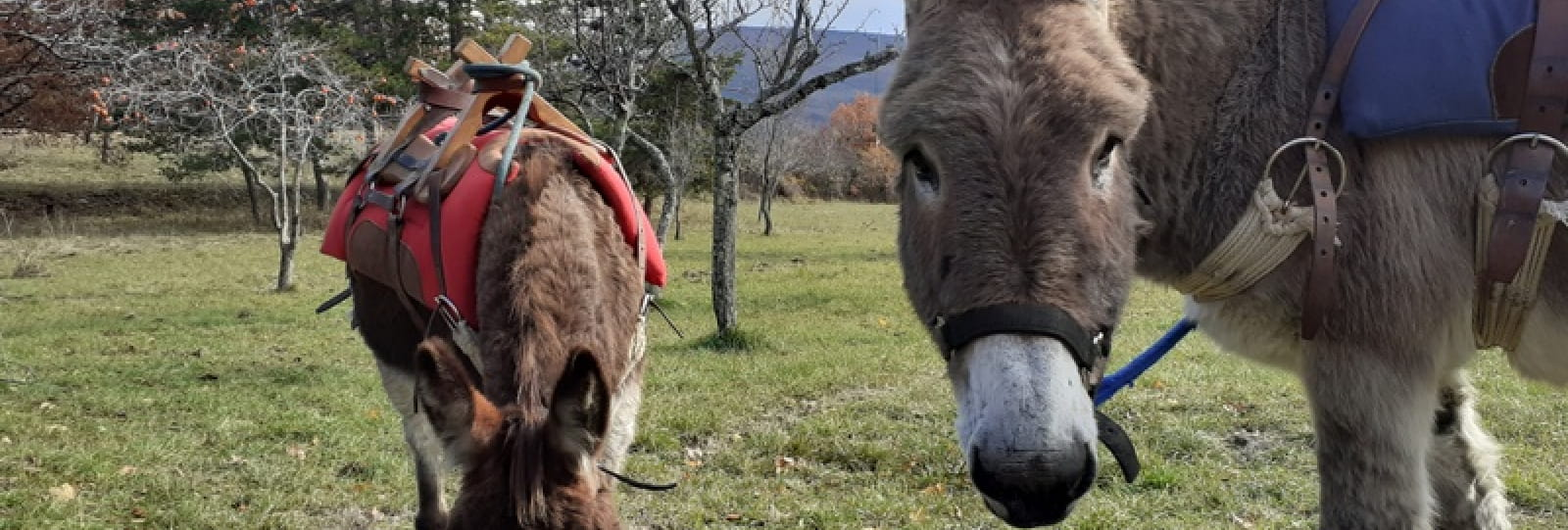 Randonnées avec 'A fleur d'âne'