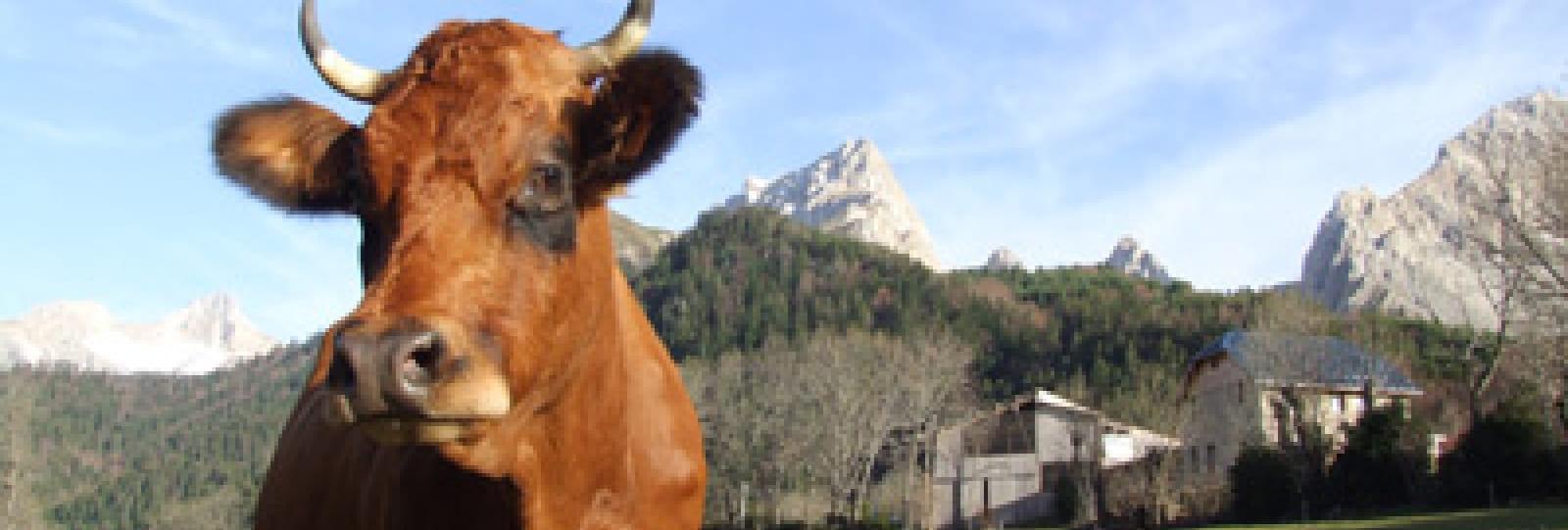 Ferme de la Jarjatte (farm)