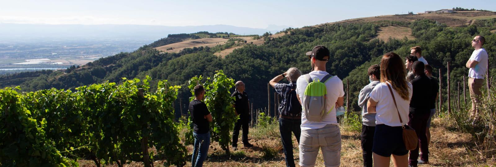 De la vigne au verre : à la rencontre des vignerons avec Terres de Syrah