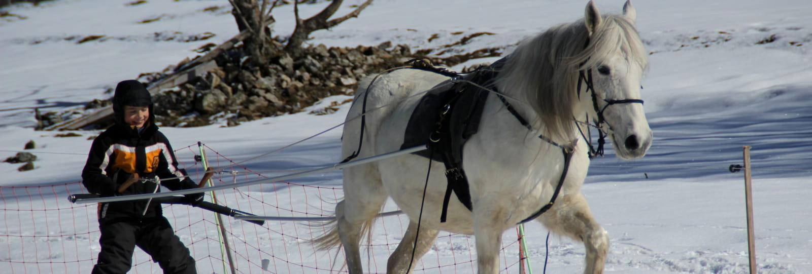 Parole de cheval