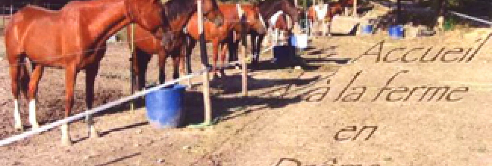 Stage Equestre