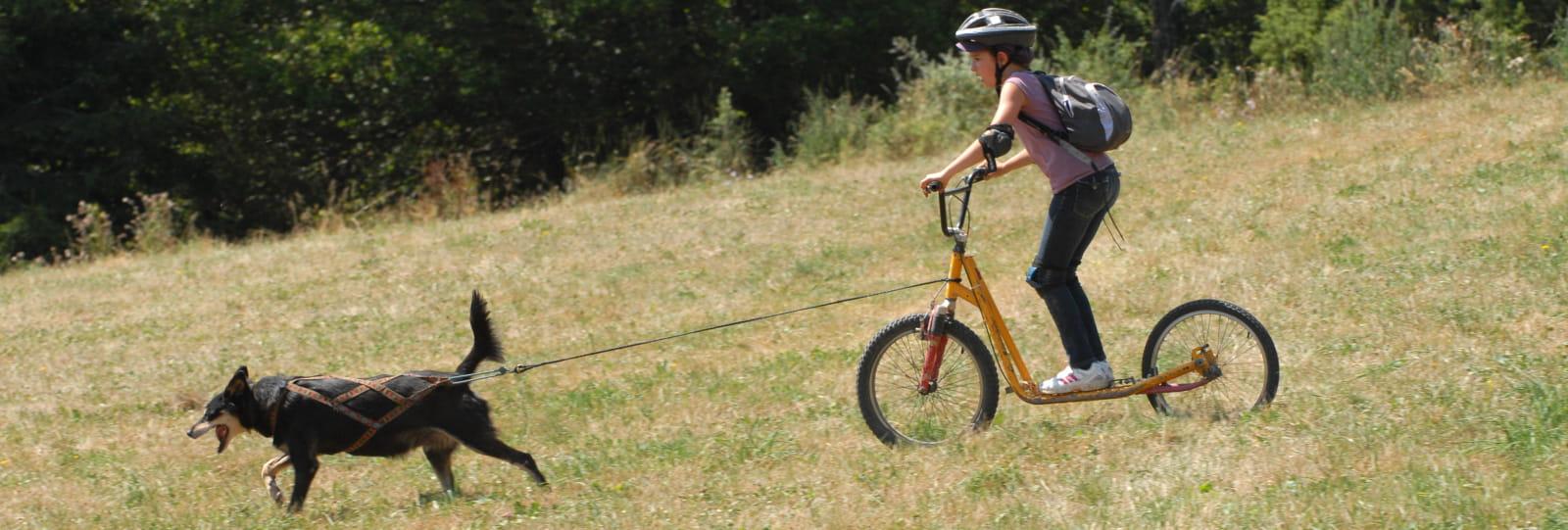 Trottinettes tout terrain attelées aux chiens - ANNULE