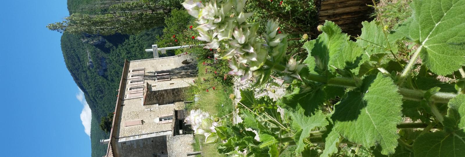 Atelier du Jardin Botanique de Ste Croix : Mon Apéro aux Plantes