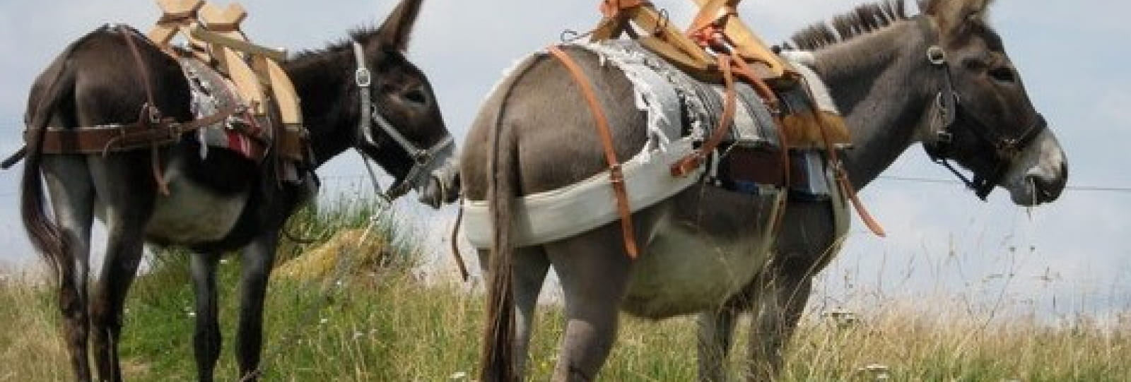 Balade avec un âne avec Les âneries du Désert