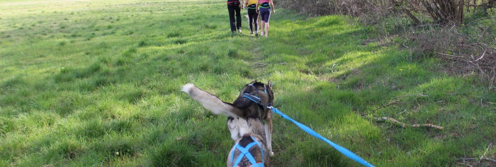 Wood track - cani-rando découverte