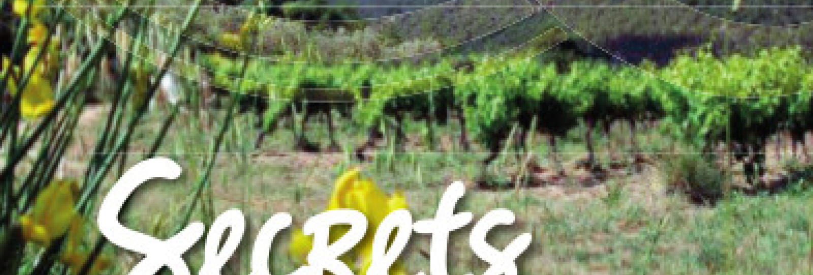 Jeu de piste dans les vignes et les oliviers !