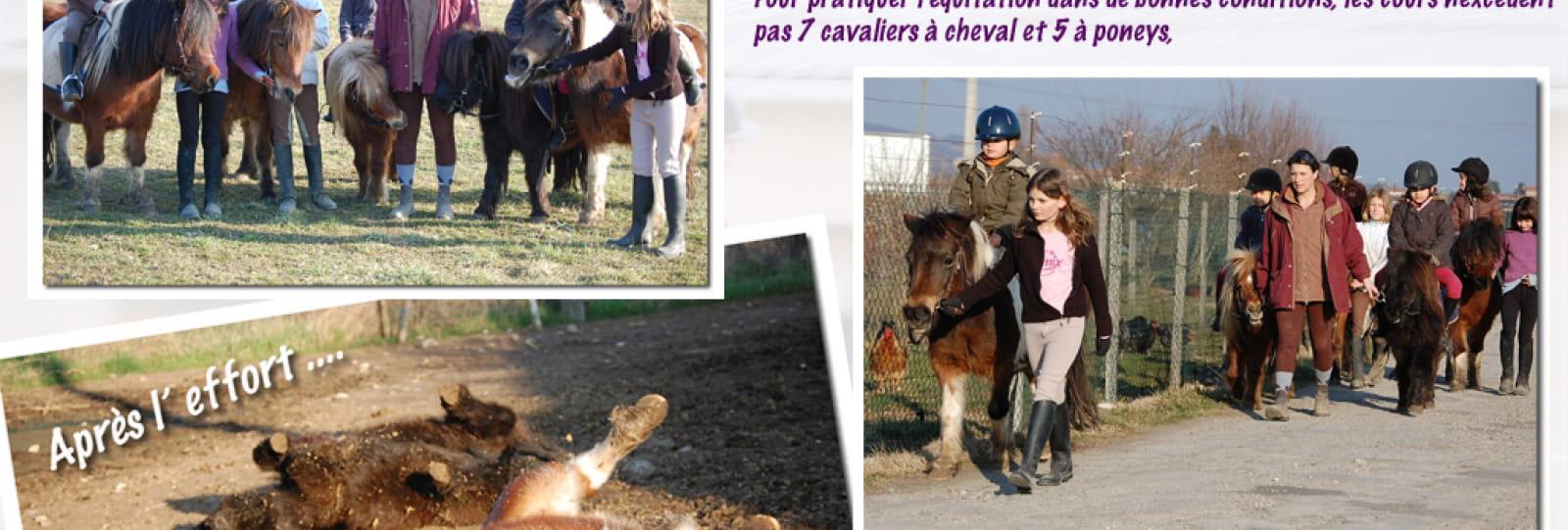 Enseignement chevaux et poneys au Centre Equestre des Chasses