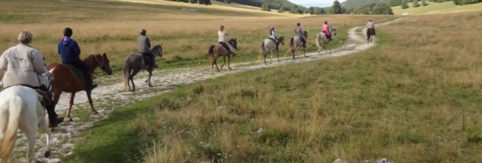 Randonnée et équitation avec le haras du Freysse