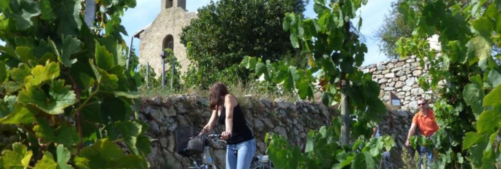 Balades viticoles en vélo électrique
